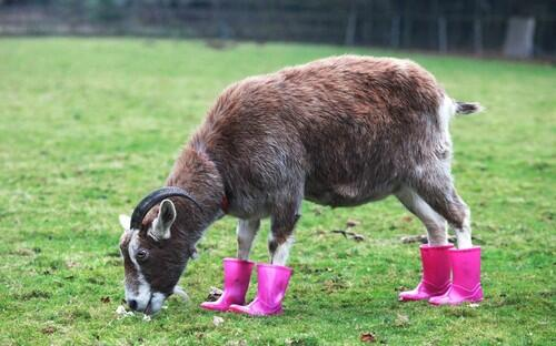 It's so wet and windy in Cornwall that even the animals are wearing wellies... #stormageddon #welliesattheready http://t.co/65FoLUAIxy