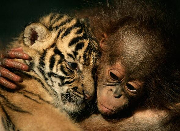 Happy Valentine's Day! Celebrate with these animal pairs that prove love is blind.  http://t.co/z8BuQOKJP0 http://t.co/uMH2mkLBwm
