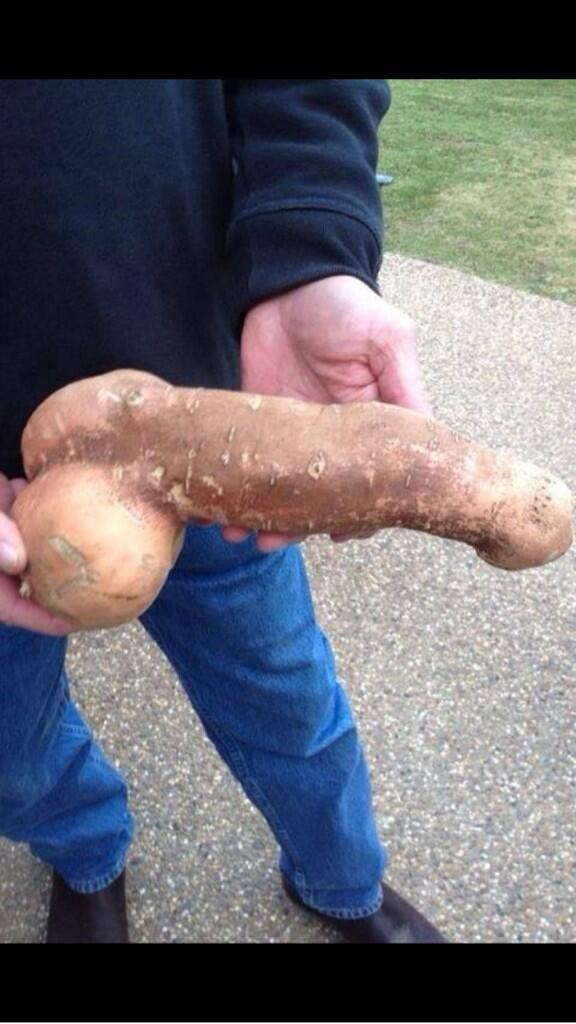 "That is truly magnificent! >> RT @Henry_Leon: @thejamesmax  one for you rt ""@amandaboers: Sweet potato anyone? http://t.co/nx9zeAu1QB"""