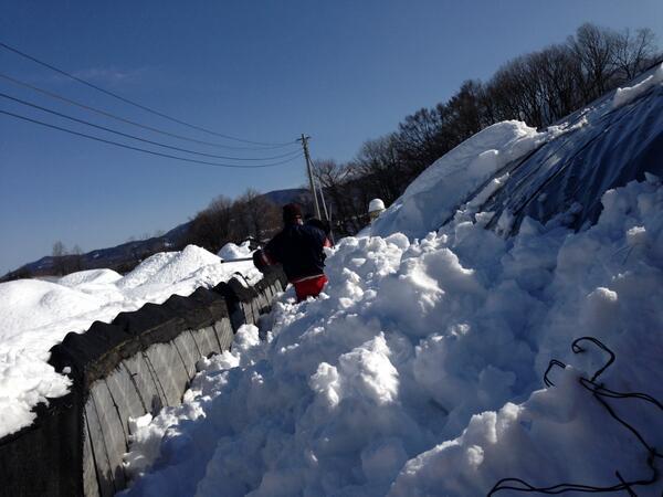 (山梨大雪被害続報2)写真は僕の働く白州郷牧場、ビニールハウスの現状です。雪に埋もれ、ほとんどが潰されました。数日後に再度雪との予報で、生き残ったハウスの雪下ろしをしているところです。山梨全域同様とのこと。大被害対策もお願いしたい。 http://t.co/h9xoy38ezn