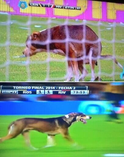Dog defecates on pitch during Central v River Plate; Stewards fail to catch him for 5 minutes [Video]