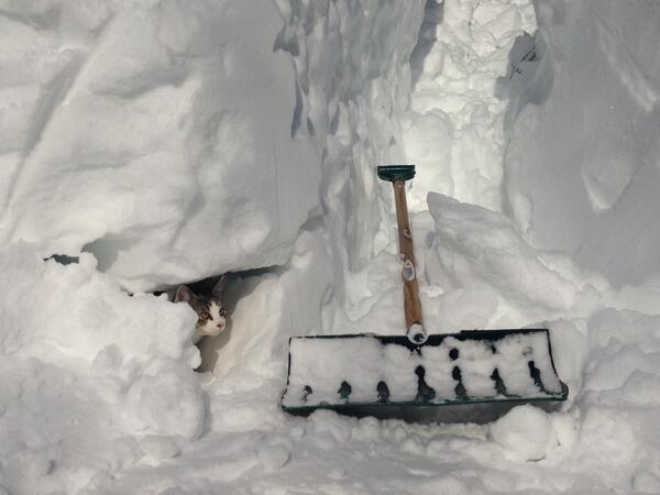 クルマの下に空いた穴から中に入ってみた。 http://t.co/KhqDSRIfxk