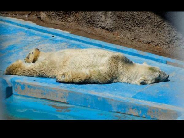 """Everyone pls RT! @PaigeHunter_NYC: @PeggyTanous HE needs HELP!! Thank you very much! #OsoArturo @PacoPerezMza http://t.co/TBRi3Uf348"""""""