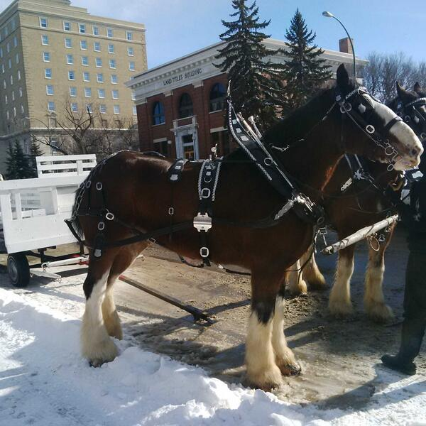 @CityofRegina @ReginaDowntown Free Carriage rides today. What an awesome weather day for it to happen! http://t.co/YNu8HFyO7v