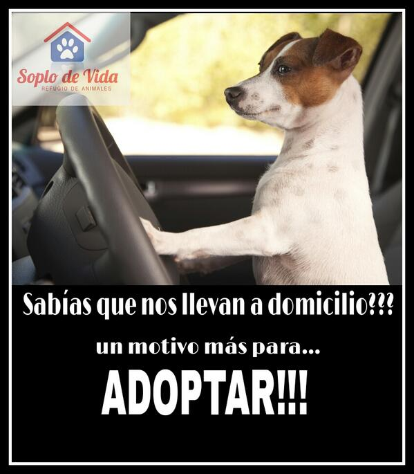 Sabías que te acercamos a domicilio al perrito que elijas? Un motivo más para Adoptar!! @coco_maggio @nikitaneumann http://t.co/ySYP8nbCBA