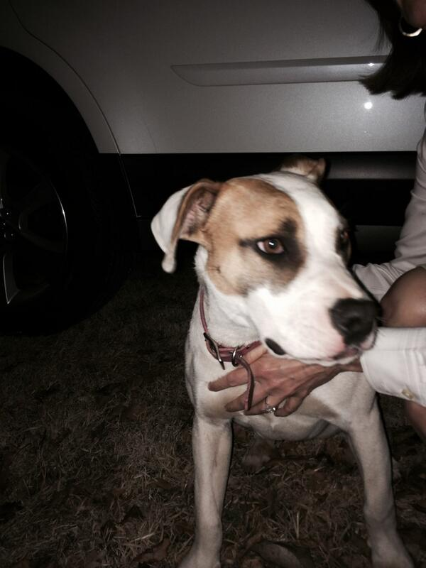 Found lost dog in Tulsa at Riverside and Peoria.  Please share/RT http://t.co/Mdr0munQf4