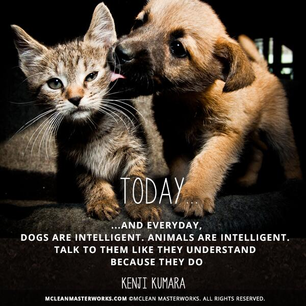 #Dogs are intelligent. #Animals are intelligent. Talk to them like they understand... https://t.co/C8ssJuBqzX http://t.co/93T9lJ9J6A
