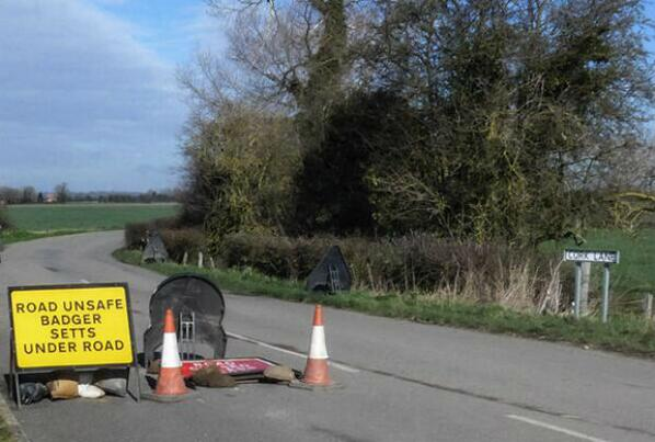 Only in Lincolnshire? Road unsafe - badger setts under road http://t.co/qhaaefJ58H  http://t.co/psrKbi7svo