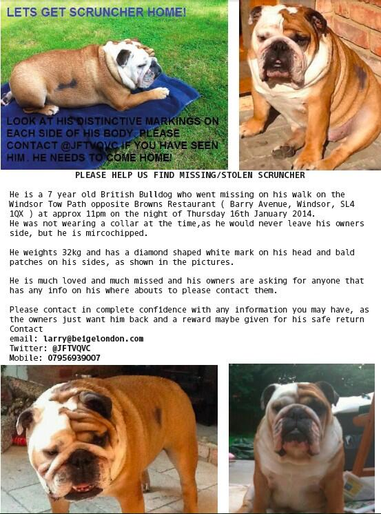 RT @Michellelesley3: @NolanColeen Pls RT: Scruncher is still missing! Do YOU know where he is? PLEASE contact @JFTVQVC his REAL OWNERS! Xx …