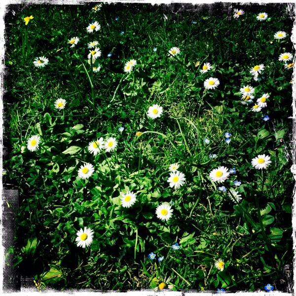 Un petit air de Printemps #happy http://t.co/L6i1xKq4HB