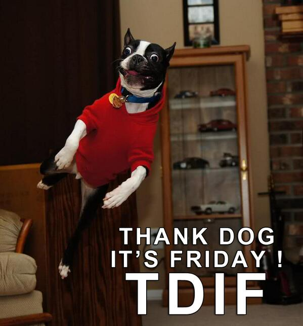 """Boston Terrier Dogs on Twitter: """"Smile, It's Friday! Have ..."""
