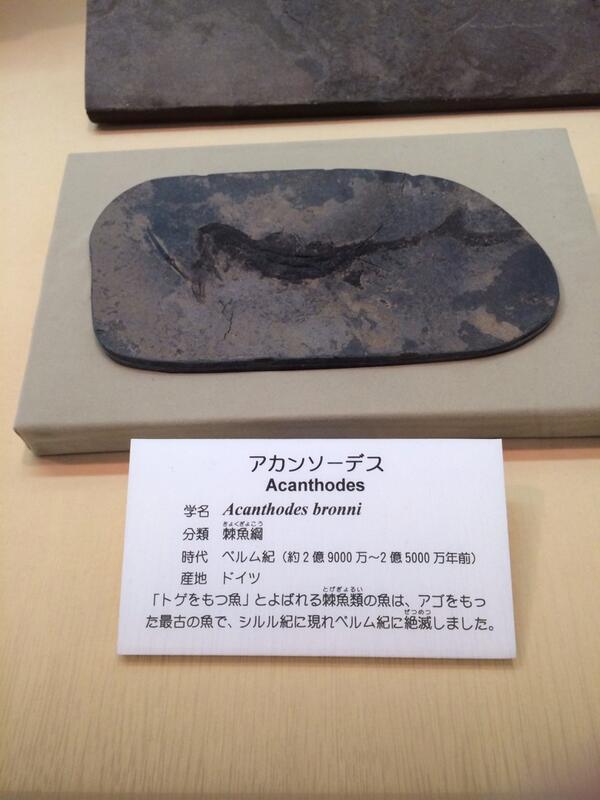 /11位 この化石の名前やばいww http://t.co/Nsn9Ga2XeE http://t.co/CUfm2mx5I1 #twitr