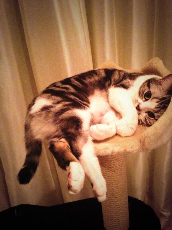 #猫の日 pic.twitter.com/suOJQUsn54
