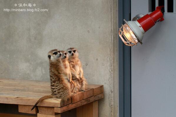 「あったかいねー」「かいねー」「ねー」  #市川市動植物園 pic.twitter.com/kSuWUo0YWU