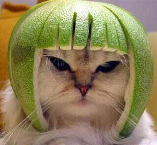 emergency kittens on twitter cats watermelon one very
