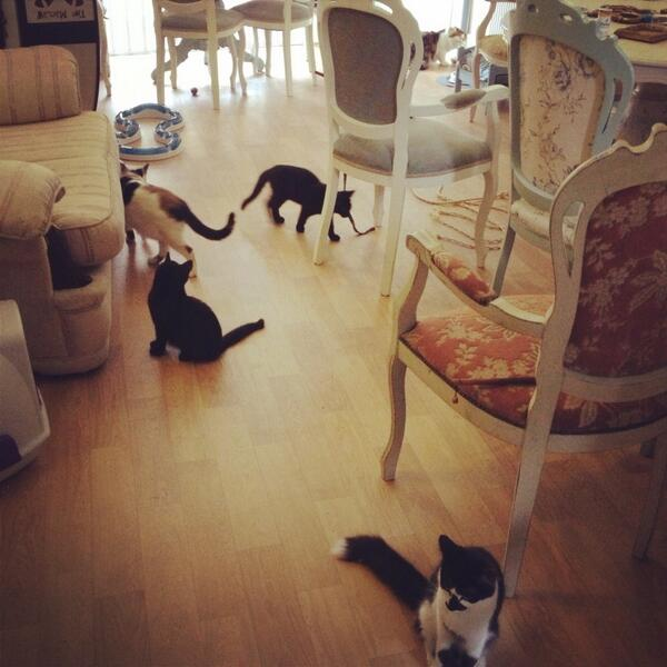 Lots of fun 'working' today @ladydinascats emporium with ALL THE CATS http://t.co/WzItKh1KPr