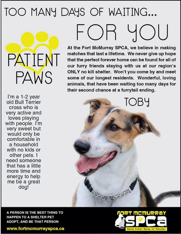 Alberta Canada - the right home for TOBY is welcome! MT @FMSPCA  #ymm #adopt #Alberta #Share http://t.co/4lDa4sfWjd
