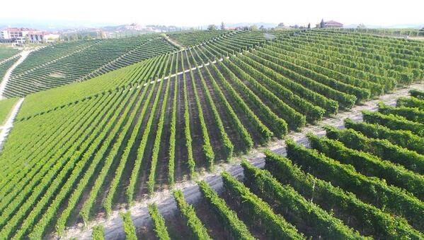 Barolo; learn about the great vineyards and explore wines in our interactive map http://t.co/tugte43LUW @vinousmedia http://t.co/MazflFMzWs
