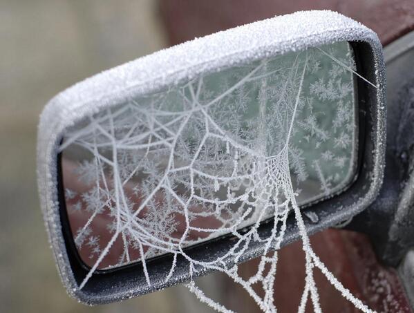 蜘蛛の巣って凍るんだ・・・ pic.twitter.com/zTzvXByFzS