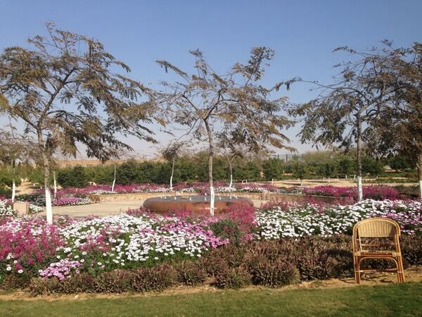 There is so much serenity in the AUC gardens. #JRLWeb #JRMC202 http://t.co/npa8dNY9rp