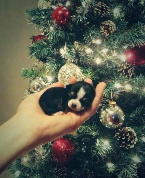 クリスマスツリーと子犬 pic.twitter.com/yrM3X4qtXI