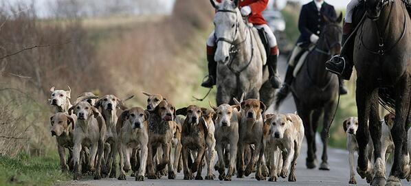 Is the Countryside Alliance anything other than a lobby for the return of foxhunting? Bhff1mcCMAA64Gd
