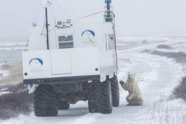 awesome. RT @globeandmail: Google is mapping Canada's Arctic tundra, w polar bear photobombs http://t.co/yAtdvl7Ssi http://t.co/qSse4D2t7M