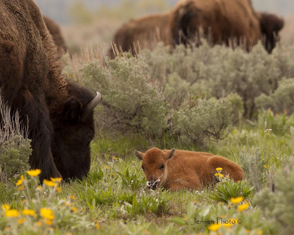 Twitter / Jensen_Photo: #Yellowstone #photography ...