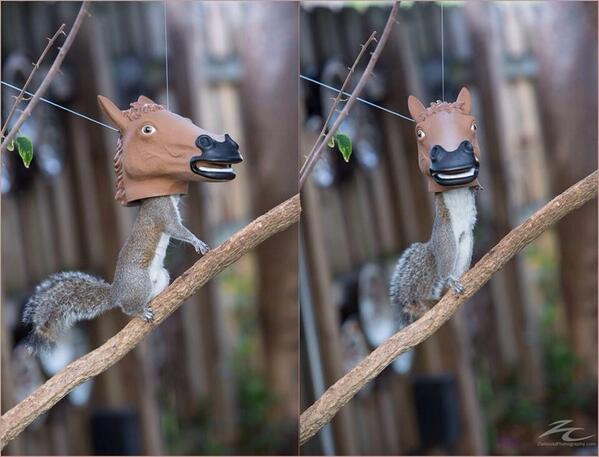 Best thing ever. RT @BuzzFeed: Someone actually invented a horse head squirrel feeder  http://t.co/iZFc0XknJW http://t.co/1sZuCcZJN4