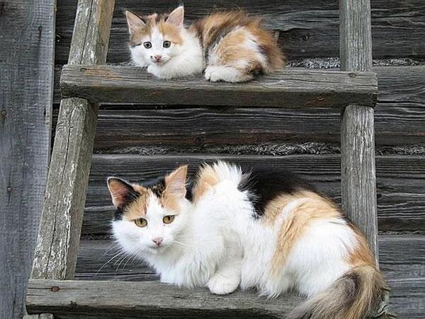 動物の親子の写真いろいろ、かわいすぎるでしょ~~~ http://t.co/4G0x66lHUC http://t.co/PuJ5B7dFHs