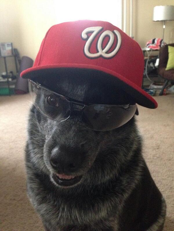 One more vote for #nerdpower #EricSogard #FaceOfMLB and specs #ClippardBobble #NatsBobbleVote http://t.co/WCberr86DH