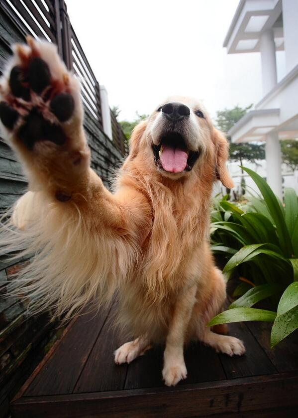 High five it's Friday! http://t.co/cpJnfd5DZA #TGIF #weekend #photography #imageshack http://t.co/XO6Ktb0OrL