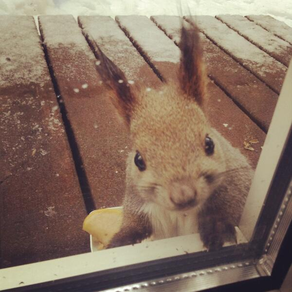 (*º ロ º)ノきちんと!朝ご飯を用意して!キッチンで待ってて‼ pic.twitter.com/CdoGlRZqcd