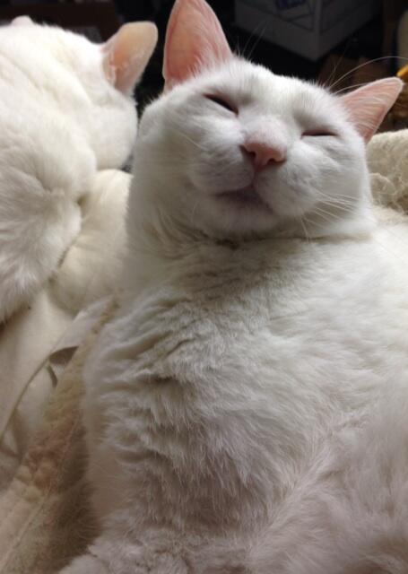 僕はまだ寝るニャ。(笑顔) pic.twitter.com/7SKBBhTpXU