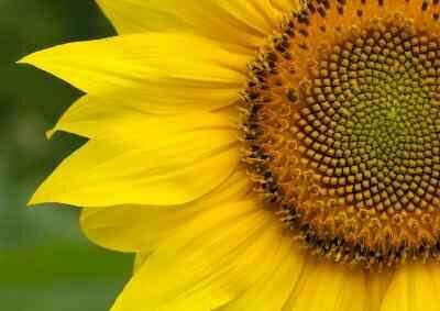 #FibonacciFriday http://t.co/WXfv9xPAbF