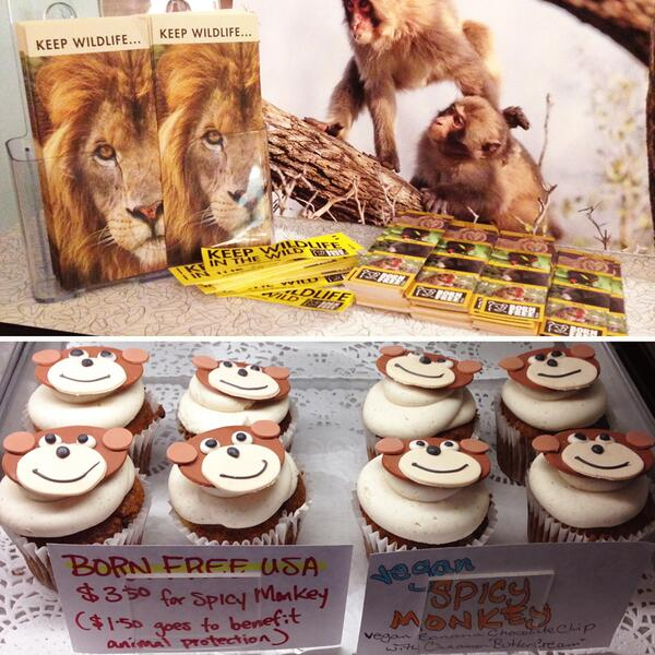 World Wildlife Day Special, the Spicy Monkey: choc chip banana cake w/ cinnamon frosting. Proceeds to @BornFreeUSA! http://t.co/wo2QOStjnq