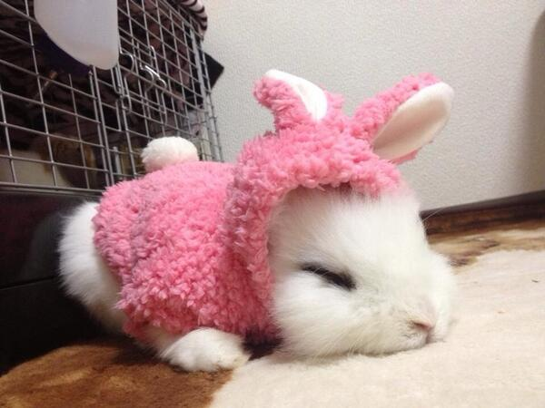 おやしゅみ〜( ˇωˇ )💓💤ネムネム pic.twitter.com/bMUBXkWYjT @mofumofu_puatan