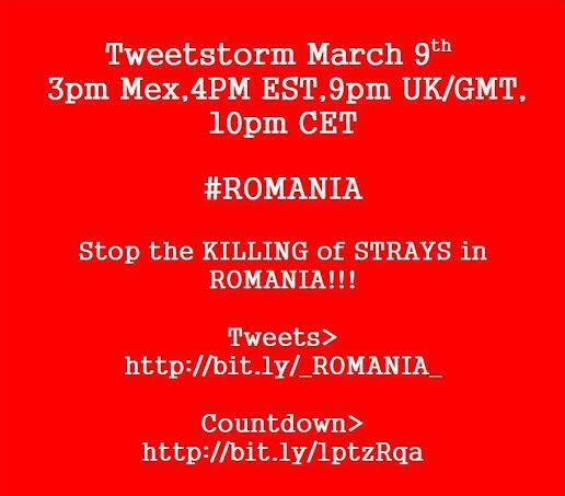 RT @MelAnimalLover: @NolanColeen MS Nolan. Can you please retweet my tweetstorm? For the Romania Dogs being slaughtered. Thank you. http://…