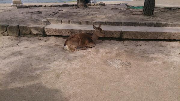 鹿。たくさんいる http://t.co/Q1WftnpjHb