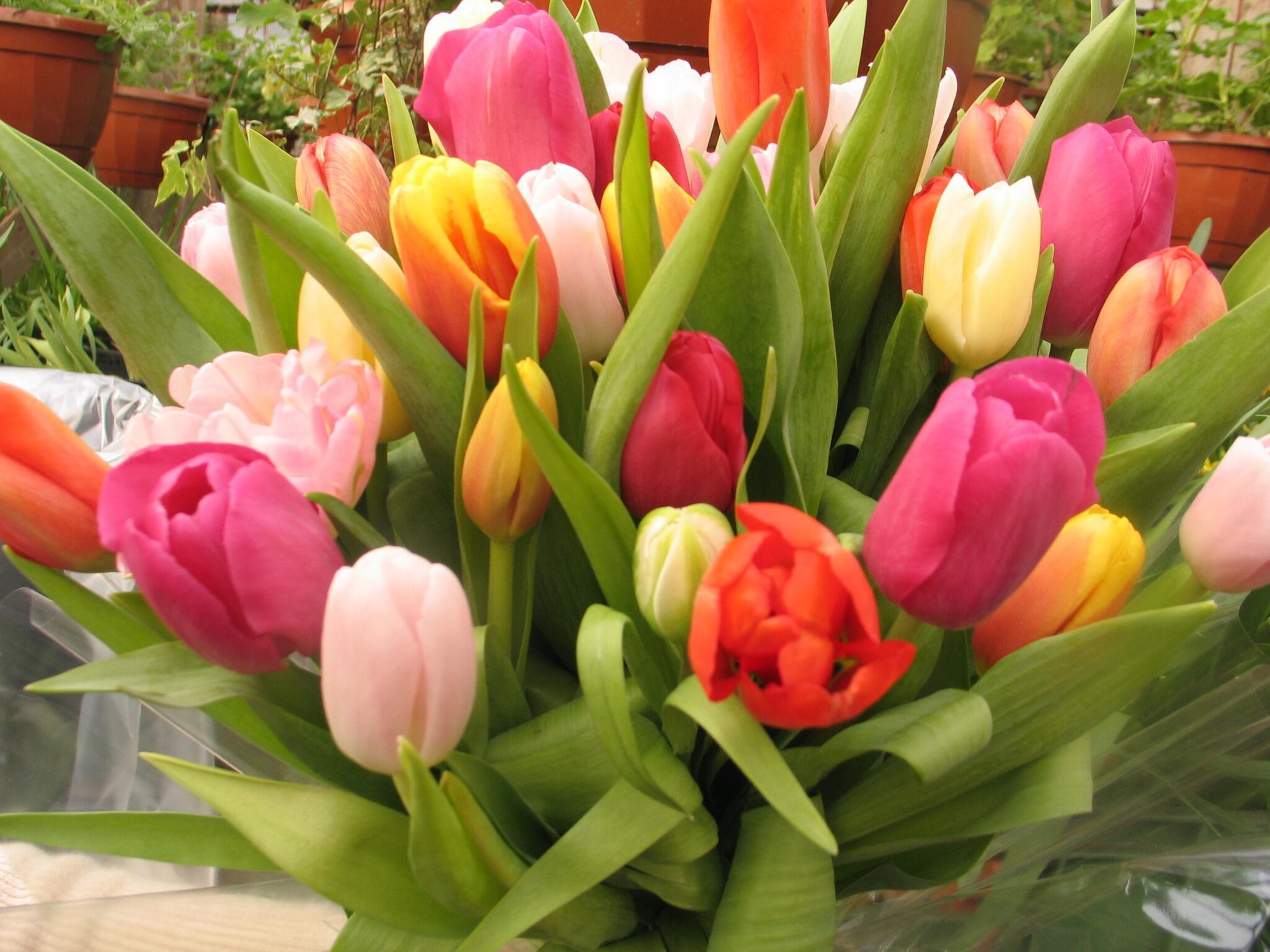 8 марта красивые букеты, букет невесты пионы