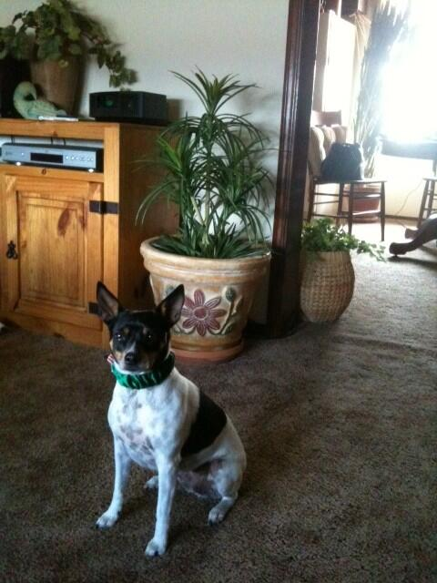 #DaffysToyBox Ingrid wanted us to know where she tweeted from. She loved the 30 yr old plant in back sunroom. http://t.co/6c9MWDfwip