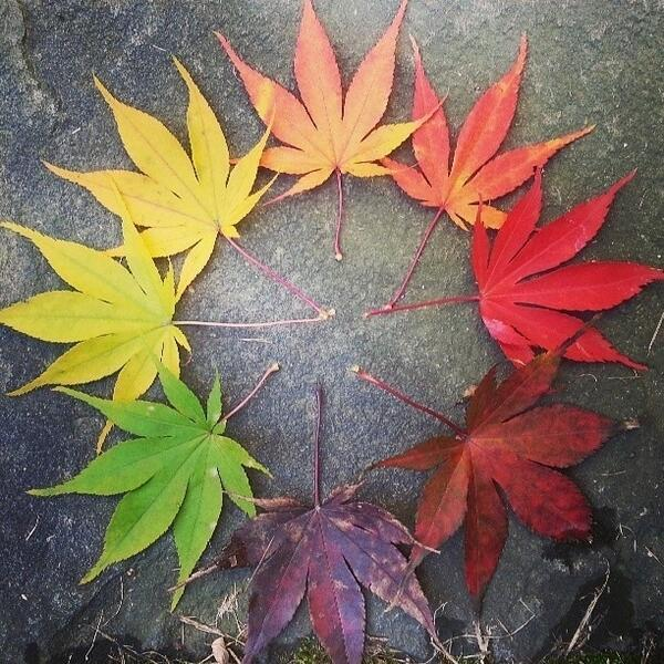 How beautiful! @SamesCarolyn RT @StunningWorId: Life Cycle of a Leaf http://t.co/CjaUn7TRLR