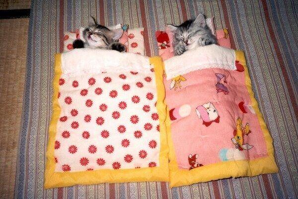 ふとんの中でいい子にねんねする子猫がかわいすぎるwwwwwwwwww pic.twitter.com/bBiBSSevkv