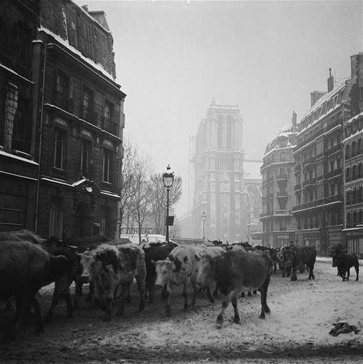 Paris zigzag on twitter troupeau conduit a l 39 abattoir for Chambre d agriculture paris