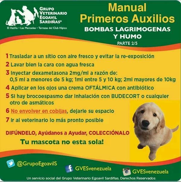 #PrimerosAuxilios veterinarios para los callejeritos afectados x bombas y humo RT http://t.co/8S609xQHlB