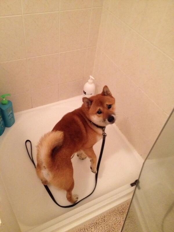 散歩と見せかけて犬を風呂に連れてった結果wwwww