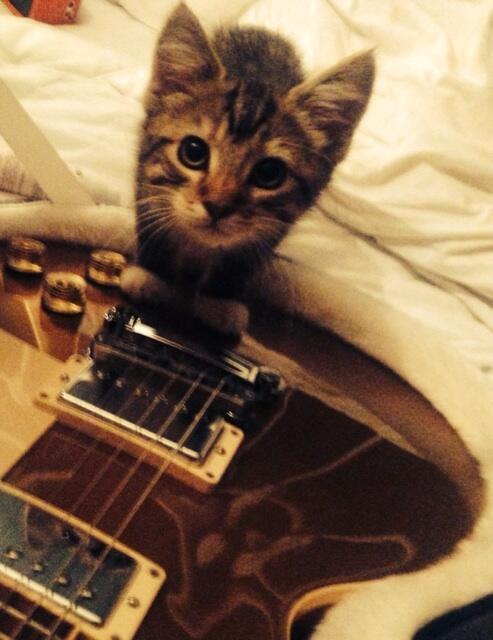 Ed Sheeran S Cat Graham