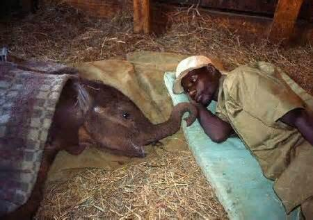 """@ImageOfWildlife: It's bedtime at @DSWT. Night night!  #StopWildLifeCrime  #SayNoToIvory  #KillTheTrade http://t.co/eTkQZzvLKy"" AMOR"