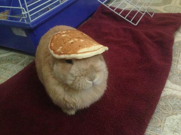 パンケーキの帽子 pic.twitter.com/BkPk5gKcSY