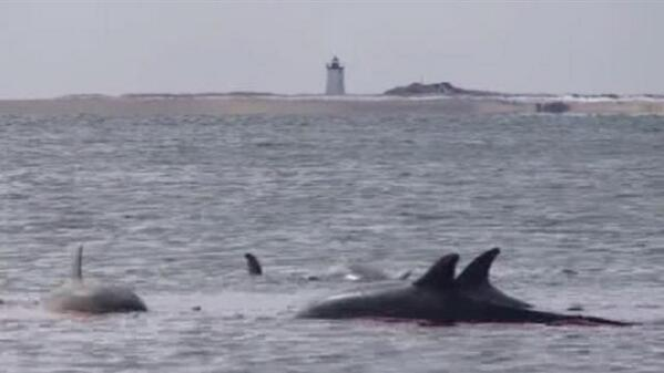 Five #dolphins stranded on #Provincetown beach. http://t.co/EXv6IapzGW http://t.co/rLPCxCEQRK